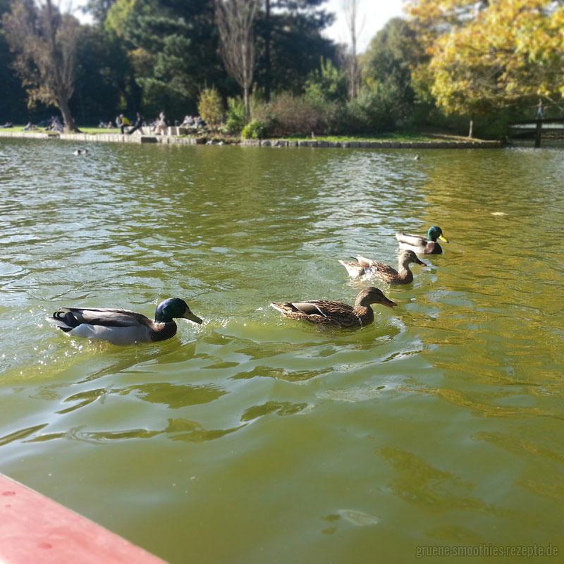 Herbstliche Ruderbootfahrt 1