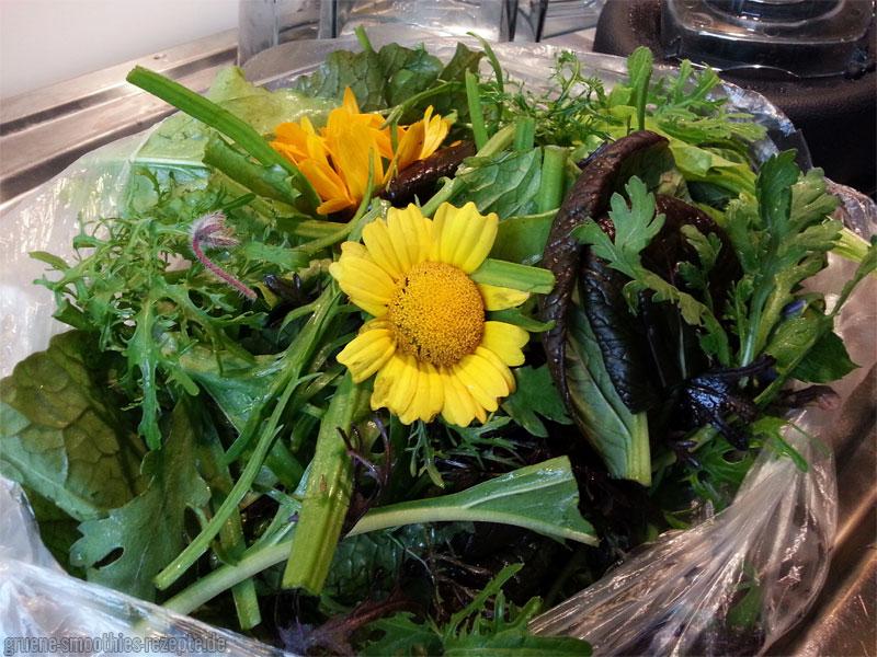 Wildkräuter, Essblumen und Pflücksalat vom Ökomarkt in Köln