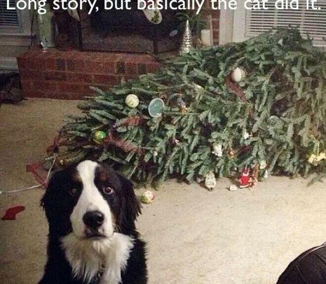 Fröhliche Weihnachten 2016 euch allen